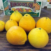 Organic lemons, fresh off the tress, at Rancho Del Sol.